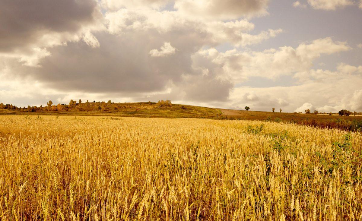 Postoji li išta ljepše od zlatne jeseni u Slavoniji?